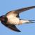 Bogs & Blogs – Summer Birds Of Oxford Island