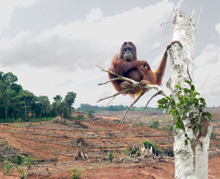 Bogs and Blogs – Palm Oil