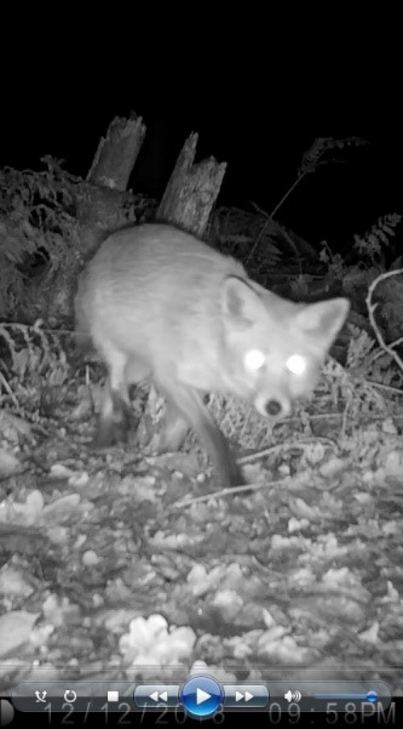 Adventures of a Busy Bee – Camera Traps
