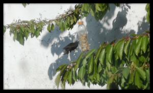 Bird Feeder 3