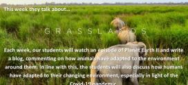 Planet Earth 2 – Grasslands – Michael McCoy